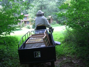 Taking the honey to the house