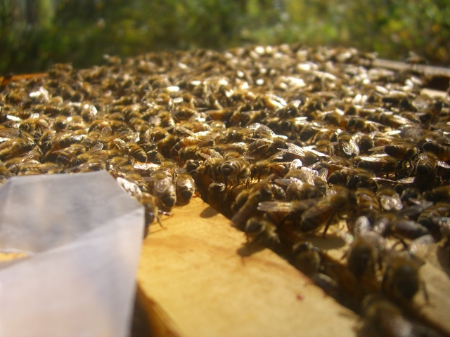 Sunlight sparkling on the bees...a bee-utiful sight.