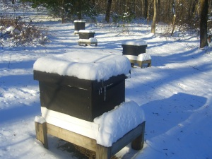 Judging from the dip in the snow on top, the hive is warm enough to melt it.  Icicles are on the outside of the hive.