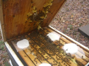 At Winter Solstice, bees were busy, but  still had plenty of grease patties.