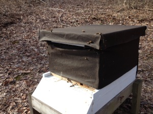 Look closely--bees coming and going at the entrance and at the lid.  Hive A.