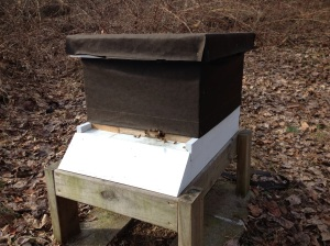 Hive C.  Bees coming in for a landing after their cleansing flights.
