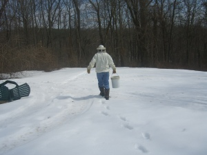 Let It Bee Spring--Beekeeper starts the season