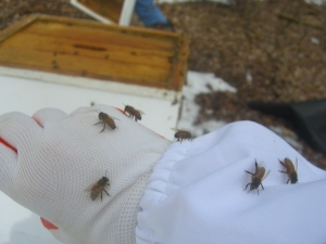 They are happy to bee with me.