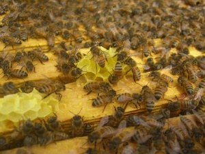Golden honeycomb...a beautiful contrast to still barren looking March.