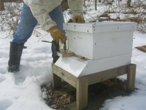 Sugar water feeders go on each hive.