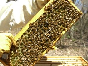 A peek in the other hives...
