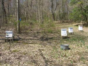 Happy to have 4 hives full!