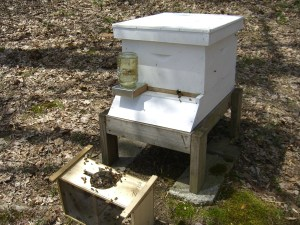 The sugar water feeder is set up to help the hive get started.  Straggler bees still in the shipping box will join the rest soon.