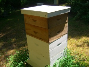 Hive D.  We took the lower brown box and kept the  top box on for a potential fall harvest.