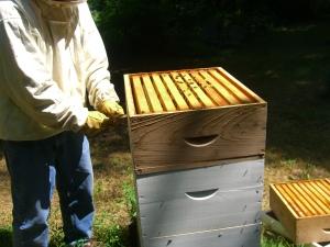 Removing the honey box