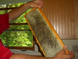 Frame filled with capped honey