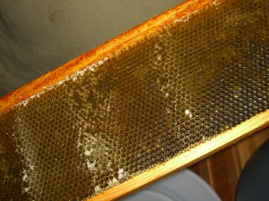 Spinning the honey is a lot easier than scooping 48,000 cells with a little spoon