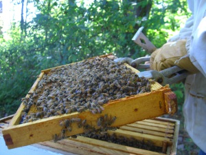 Happy healthy Hive A