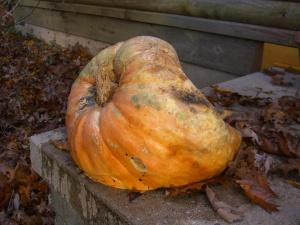 Deceased mutant pumpkin.