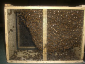 4 pounds of bees