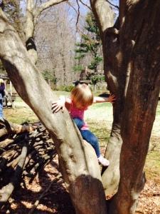 emily & the tree